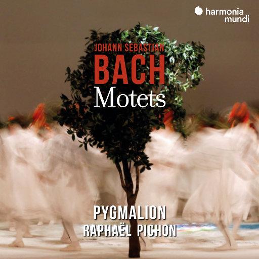 巴赫: 经文歌,Pygmalion,Raphaël Pichon
